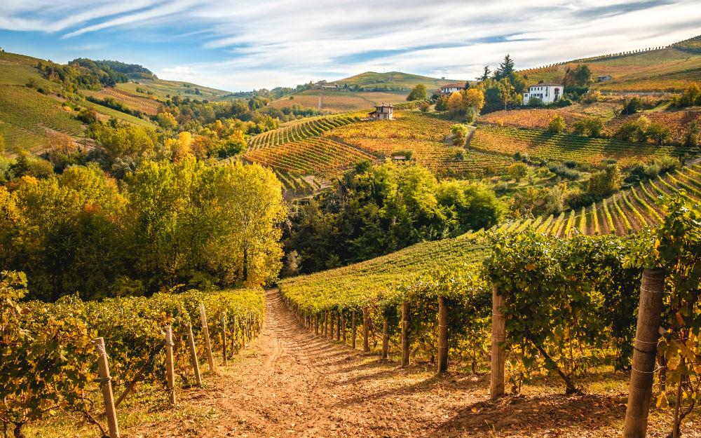 Piemonte - Gavi (AL)