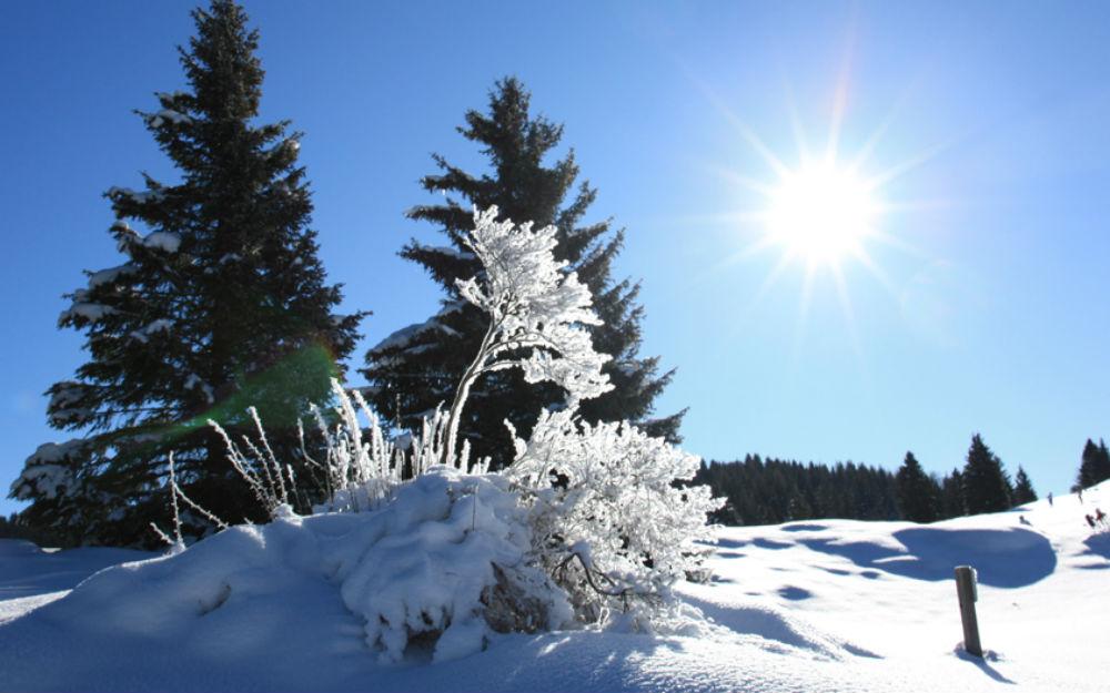 Trentino-Alto Adige - Dimaro Folgarida (TN)